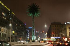 Oświetlili palmę na urodziny