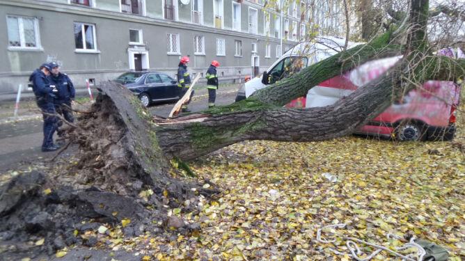 Wiatr powalił drzewo. <br />Uszkodzone samochody