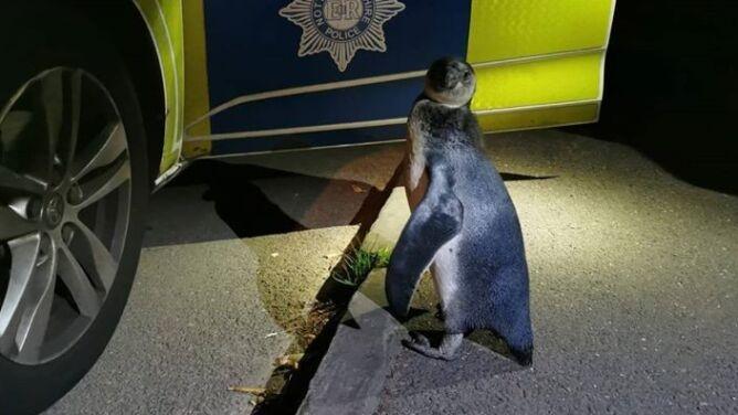 """Podczas patrolu natknęli się na pingwina. """"Szedł środkiem drogi"""""""